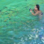Nade com peixinhos coloridos em Paraty