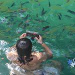 Nade com peixinhos coloridos em Paratyhã - Passeios de escuna pela Baía de Paraty